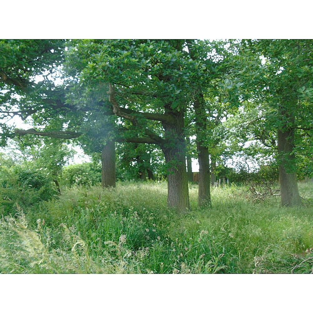 Angrove Country Park